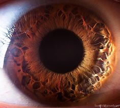 """(TruthSeekerDaily) Has someone ever said to you """"Your eyes are beautiful?"""" I think if they saw them up this close they may not say it quite like that. That is unless odd looking surfaces of other worlds is beautiful. I think these pictures give eyes a look that pushes them into the world of weird…"""