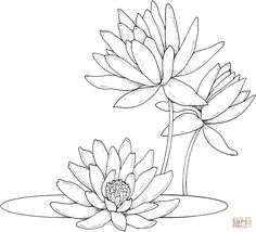 22 Trendy Flowers Lotus Drawing Coloring Pages Lotus Drawing, Lilies Drawing, Drawing Flowers, Lily Pad Drawing, Free Printable Coloring Pages, Coloring Pages For Kids, Art Floral, Water Lilies, Fabric Painting