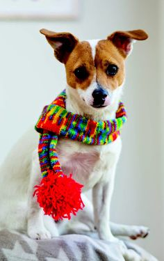 Is your pooch low on fashion accessories? #Knit a pompom scarf for your #dog!  Source - Outrageously Adorable Dog Knits