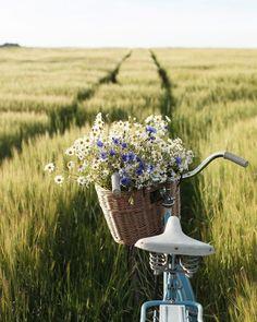 Wildflowers in a bike basket in field! So beautiful! Art Photography Portrait, Vintage Photography, Nature Photography, Photography Aesthetic, Portrait Art, Spring Aesthetic, Flower Aesthetic, Aesthetic Art, Life Is Beautiful