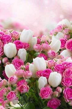 50 Ideas spring wallpaper iphone backgrounds nature pink flowers for 2019 Beautiful Flowers Wallpapers, Beautiful Rose Flowers, Pretty Wallpapers, Flowers Nature, Amazing Flowers, Pretty Flowers, Pink Flowers, Paper Flowers, Desktop Wallpapers