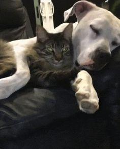 Aww buddies