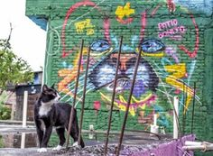 Cat graffiti color Free Photos for free download