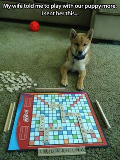Playing Scrabble with the dog. Take the time to read the board and the letters. It's hilarious.