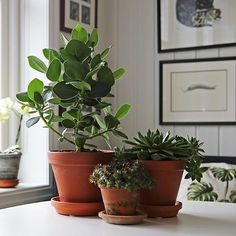Feng Shui Pictures: Learn the meaning of the typical Feng Shui symbols - Decoration Solutions Feng Shui Tattoo, Feng Shui Interior Design, Feng Shui Symbols, Feng Shui House, Green Environment, Bamboo Furniture, Scandinavian Home, Green Plants, Houseplants
