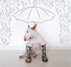 18 funny illustrations of Rafael Mantesso's bull terrier Jimmy Choo