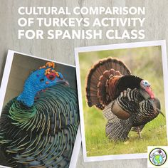 Cultural Connections: Comparing Turkeys in México & US as part of a Thanksgiving Theme in Spanish Class