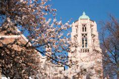 UW Cherry Blossoms | Spring '14