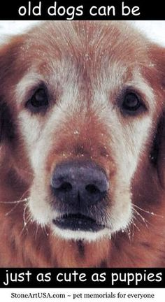 Adopt a #SeniorDog! Old dogs can be just as cute as #puppies ♥