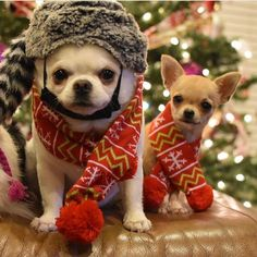 Ready for winter... - Tap the pin for the most adorable pawtastic fur baby apparel! You'll love the dog clothes and cat clothes! <3