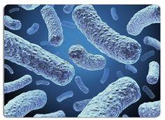 Les microflores : arômes, sécurité alimentaire, et fonction santé
