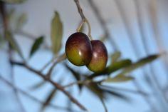 Frutos de Otoño en el Embalse de la Serena