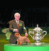 A Profile of Norfolk Terrier Eng. & Am. Ch. Cracknor Cause Celebre