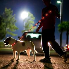 Lighted LED Dog Leash and Collar Daily Gadget Inspiration Led Dog Collar, Collar And Leash, Westies, Reflective Dog Collars, Dog Leash, Dog Walking, Four Legged, Dog Life, Puppy Love