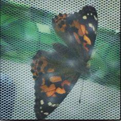 Our class butterflies!