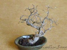 This bonsai is made with electrical wire... see how here.