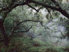 Oak Tree Forest after Storm Photographic Print at AllPosters.com