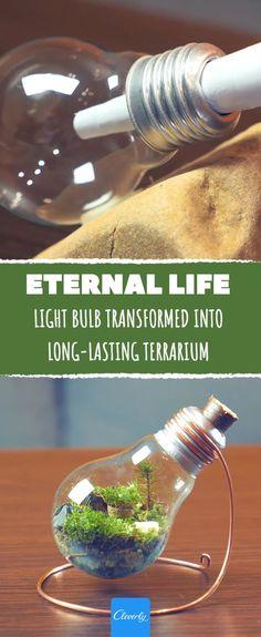 This mini-terrarium allows you to witness an amazing cycle of life #terrarium