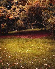 """Nature 🌲🌳 #artsofvisuals #photo #photography #photogrid #photooftheday #click #instalovers #pic #shotoftheday #bestoftheday #sony #foto #fotografia #instagood #bravogreatphoto #lightroom #salvador #bahia #brasil #lightroom #ig_color #nature #natureza #greenday"" by @henriquersluis. #ganpatibappamorya #dilsedesi #aboutlastnight #whatiwore #ganpati #ganeshutsav #ganpatibappa #indianfestival #celebrations #happiness #festivalfashion #festivalstyle #lookbook #pinksuit #anarkali #festivaloutfit…"