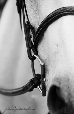 How Long Do Horses Live and Everything about Horse Age Horse Age, Horse Girl, Horse Photos, Horse Pictures, All The Pretty Horses, Beautiful Horses, Zebras, Equine Photography, Equestrian Style