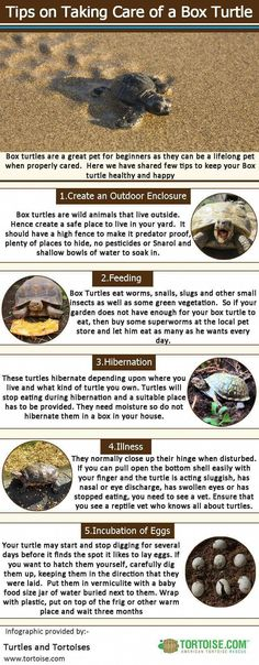 16 Best For Squirtle the Turtle images in 2017   Turtle