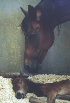 mother and new born♥