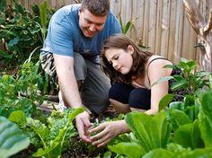 Aprenda a montar uma horta em casa - Jardinagem - iG