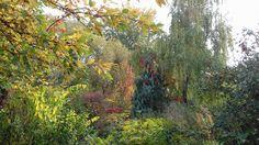 Ősz – Autumn (Kerepes)