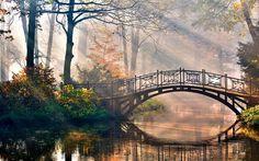 paisajes de la naturaleza árboles agua bosque tiende un puente sobre la luz del…