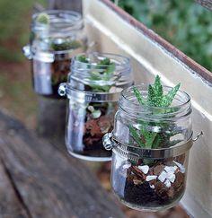 Por ter boca larga, os vidros de conserva são ótimos para a criação de terrários. Use argila expandida, terra, um pouco de carvão e suculent...