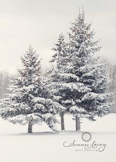 lovely shaped christmas trees