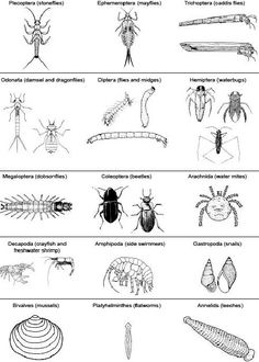 Macroinvertebrate identification key for pond and stream study.
