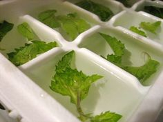 mint ice cubes *freeze in rum for mojitos* Fun Drinks, Yummy Drinks, Yummy Food, Delicious Recipes, Beverages, Freeze, Cheers, Derby Party, Fresh Fruit