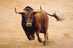 POLL: Would you ban bullfighting in Spain? POLL: Would you ban bullfighting in Spain? Animal Sketches, Animal Drawings, Animals Of The World, Animals And Pets, Bull Pictures, Arte Equina, World Animal Protection, Charging Bull, Bull Painting
