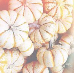 orange and white mini pumpkins :)
