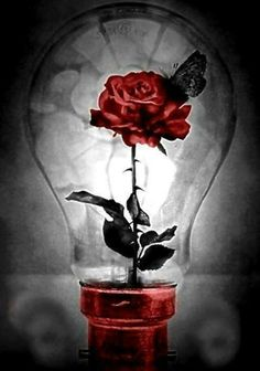 Splash of Colour ♥ Black N Red, Red And Grey, Gray, Hearts And Roses, Red Roses, Dark Beauty, Beauty Art, Light Bulb Art, Gothic Fantasy Art