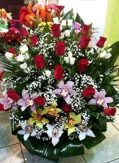 Beautiful Flowers Pictures, Beautiful Flowers Wallpapers, Beautiful Rose Flowers, Flower Pictures, Amazing Flowers, Basket Flower Arrangements, Modern Flower Arrangements, Friendship Flowers, Memorial Flowers