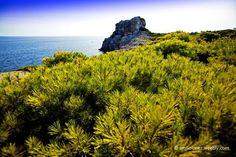 http://fineartamerica.com/featured/evergreen-emilio-lopez.html