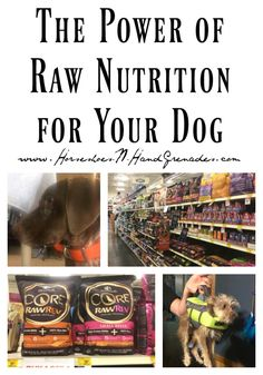 Cat Nutrition Guide Loyal blazed healthy dog food Ask The Pros Cats That Dont Shed, What Cats Can Eat, Raw Feeding For Dogs, Benadryl For Cats, Flea Shampoo For Cats, Wellness Core, Frontline Plus For Cats, Toxic Plants For Cats, Natural Dog Shampoo