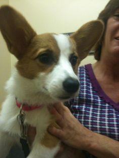 "Cute new puppy ""Clara Belle"""
