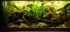 Guyana river basin biotope tank. Think Microsorum (java fern), Taxiphyllum (java moss and co.), Cryptocoryne (comes in reds), Anubias, and floating plants.