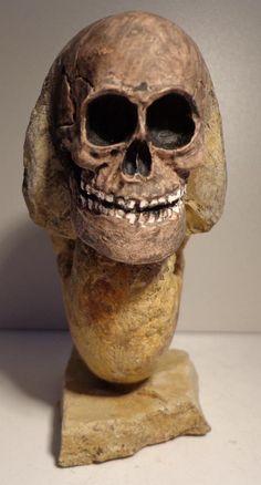 Ammonit Franken Jura Malm Aspitoseratus mit Sull Totenkopf