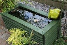 DIP YOUR TOE INTO WATER GARDENING WITH A CONTAINER