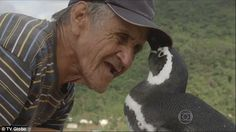 Now the unlikely pair share a strong bond which means the wild penguin likes to spend time with the man