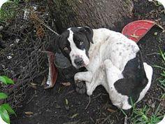 Jacksonville FL - Meet BUTTERSCOTCH a dog for adoption.