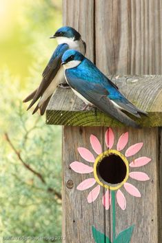 SO PRETTY...LOVE THE BLUE BIRDS!