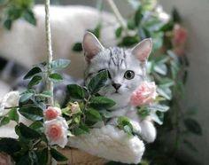 candymapi:  Rosa cape, spinam cave.  Cogli la rosa evita le spine Gabriele D'Annunzio  @mel-cat … minha querida bom dia. beijo…         buon giorno carissima!