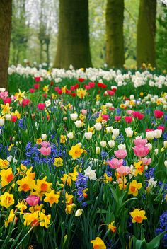 Spring flowers of every colour