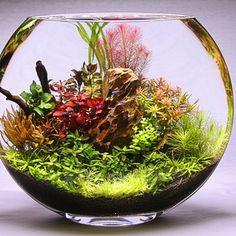 Aqua Bonsai - fishbowl - San Jose, CA, États-Unis Planted Aquarium, Aquarium Garden, Aquarium Landscape, Aquascaping, Water Terrarium, Garden Terrarium, Terrarium Bowls, Betta Fish Tank, Aquarium Fish Tank