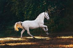 white horse running on grass field photo – Free Horse Image on Unsplash Cute Puppies And Kittens, Cute Cats And Dogs, Horse Photos, Horse Pictures, Best Horse Names, Horse Background, Horse Wallpaper, Hd Wallpaper, Horse Facts